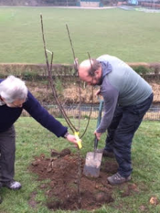 '3000 Trees' planting project
